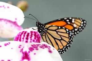Rondleiding-Emslower-Vlindertuin