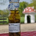 Shiitake-in-olijfolie
